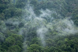 Dense rainforest covered with a light layer of fog in the morning. Thailand.