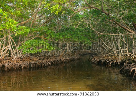Dense Red Mangroves in Caribbean - stock photo