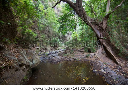dense vegetation and a forest giant hanging over a jungle river stream #1413208550