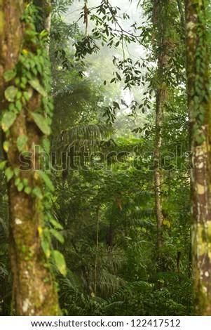 Dense vegetation in Amazonia