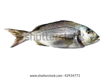 Dentex Fish