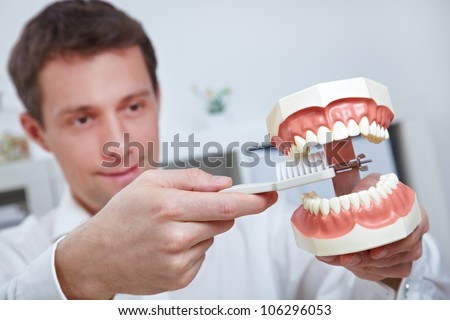 Dentist holding oversized teeth model and toothbrush in his office