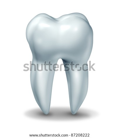 Dentist tooth symbol for dental clinic and oral surgeon for dentistry medicine surgery represented by a healthy cavity free frontal view white single molar tooth on a white background with a shadow.