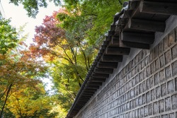 deoksugung doldam gil or deoksugung stonewall walkway covered and surrounded in autumn fall foliage colors. Taken in Seoul, South Korea