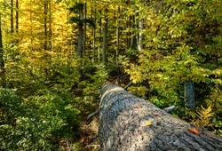 Depp forest at sunny morning