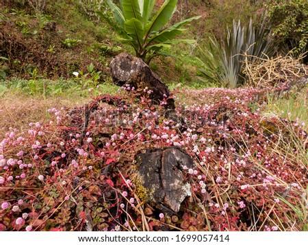 Der Tropische Bergwald am Cerro de la Muerte bei einer Wanderung durch das Savegre Tal in Costa Rica. Foto stock ©