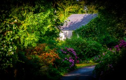 Derelict house amid colourful summer shrubs and greenery