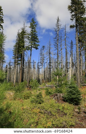 Deschutes National forest in Oregon devestated by Beetle kill and Forest fires