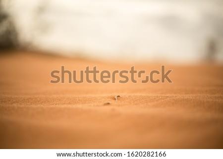Desers Sahara Sand With Focus Shot Zdjęcia stock ©