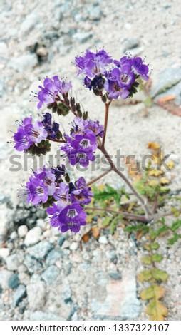 Desert Botany Plant #1337322107