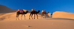 Desert Camel Train, Sahara Desert, Morocco