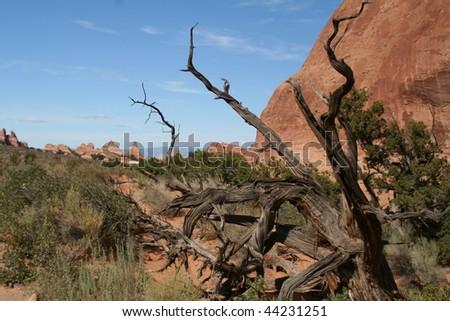 Desert landscape at Arches National Park - stock photo