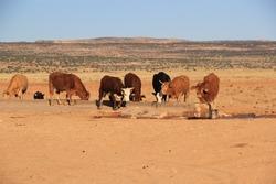 Desert  landscape In Arizona with Animals