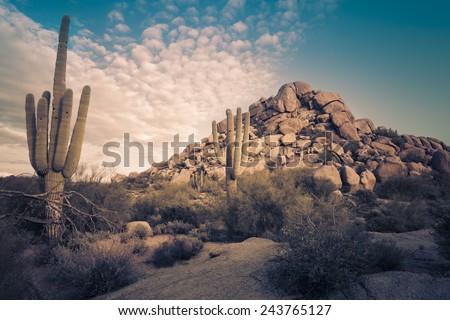 desert landscape in scottsdale  ...