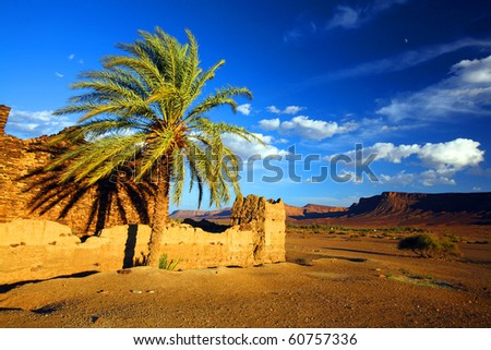 Desert landscape in sunset light
