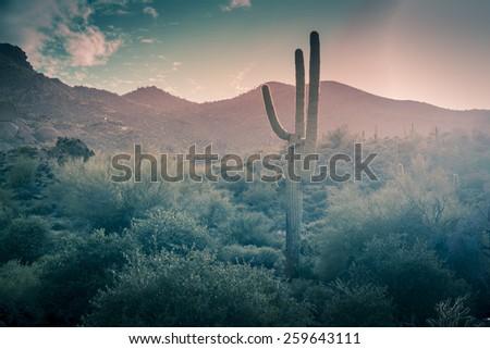 desert landscape   rain falling ...
