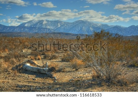 Desert Landscape. Richly colored desert landscape in winter. Snow topped mountains in the background.