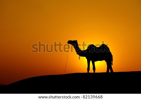 Desert landscape with camel at sunset