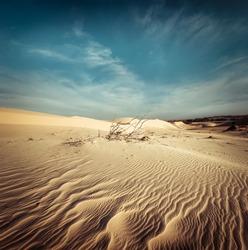 Desert landscape with dead plants in sand dunes under sunny sky. Global warming concept. Nature background