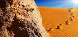 Desert lizard on the rock against sand dune in Sahara Desert