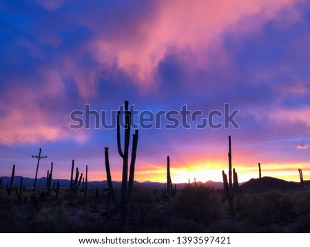Desert Nature at Sunset - Beautiful Cloudy Sky with amazing colors, and Silhouettes of Saguaro Cactus in Arizona.