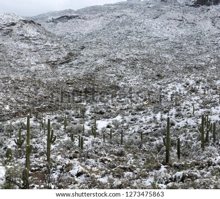 Desert Nature - Winter Snow covers Saguaro National Park in Southern Arizona