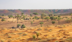 Desert of Niger, Niamey. Trees and sand in hot desert of the Sahara and Sahel near the Niger River Travel to Niamey in Niger, West-Africa. Lifestyle of people in Sahara and Sahel near the Niger River.