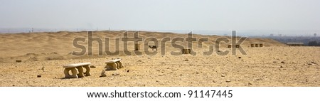 Desert of Saqqara, with its flora and fauna. Cairo in the back.