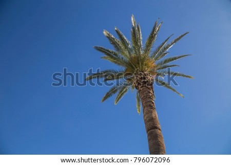 Desert palm tree against blue sky upward shot isolated right side one single background wallpaper desktop texture beach relax summer