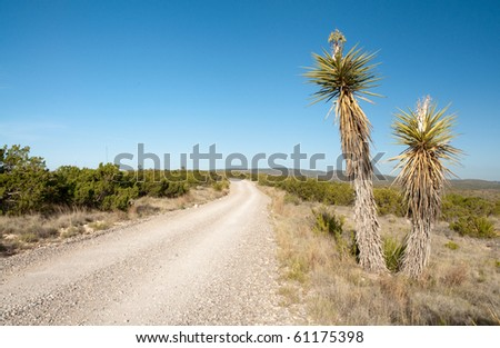 desert plants and road