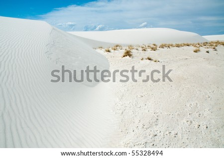 desert plants growing at the edge of white sand dunes #55328494