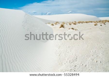 desert plants growing at the edge of white sand dunes #55328494