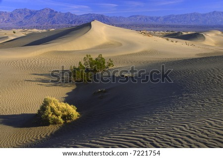 Desert plants on sand dunes in Death Valley