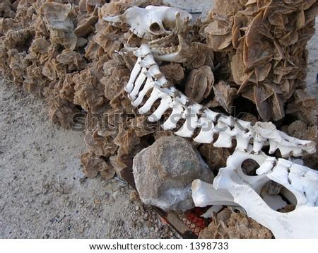 Desert roses and animal bones
