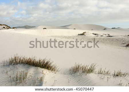 Desert scene with white sand and bushy plants scattered around, with blue skies and white clouds overhead