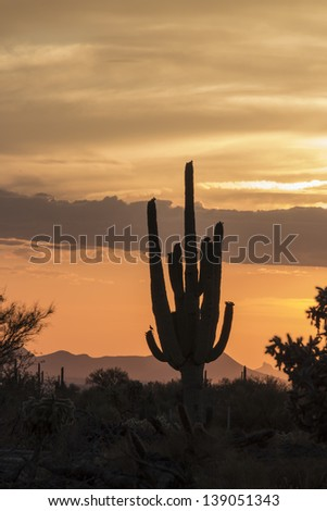 Desert Sunset in Tucson, Arizona