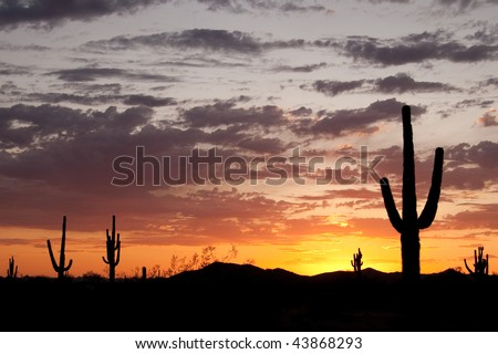 Desert Sunset with Silhouettes of Saguaro Cactus - stock photo