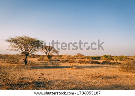 Desert trees in plains of africa under clear sky and dry floor with no water ストックフォト ©