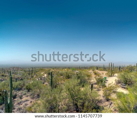 Desert valley landscape with Saguaro cactus and bushes under hazy blue sky.