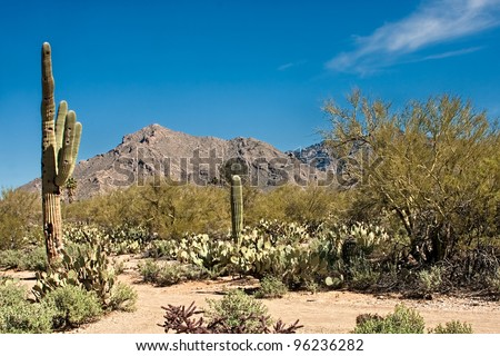 Desert View of Catalina Mountains in Tucson Arizona