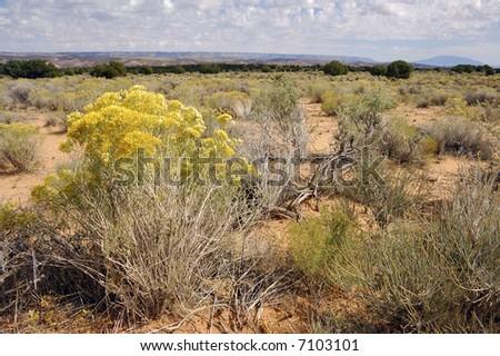 Desert vista near Escalante, Utah