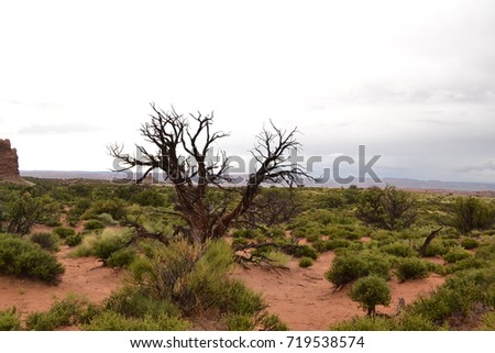Desert Wilderness #719538574