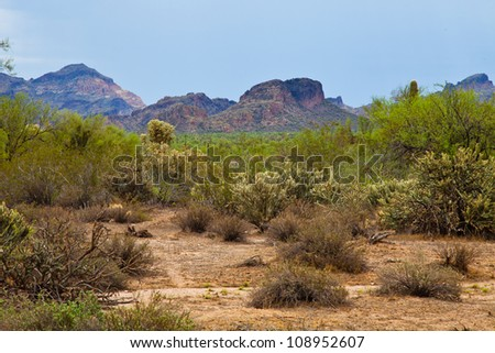 Desert with Mountains in the Background