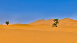 Desert with palm trees and blue sky, palm tree in the Sahara desert, two palm trees in the middle of the Sahara desert