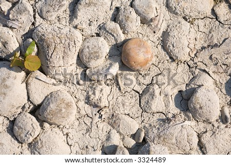 Desiccated riverbed with dry split sludge. A little green plant is born and a brown stone is laying as an Accent aside.