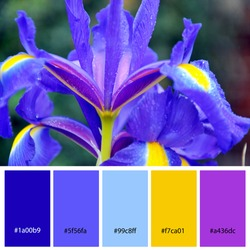 Designer Color Palette inspired by spring flowers. Designer pack with photograph and swatches with hex codes references.