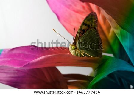 Desktop wallpapers butterfly on leaf #1465779434