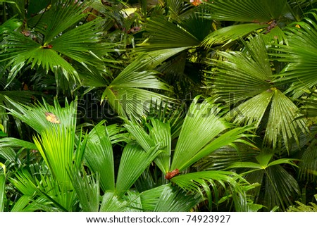 Desnse vegetation in Amazonian bazin, south america