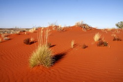 Desolate landscape with sparse vegetation and red sand. Australia