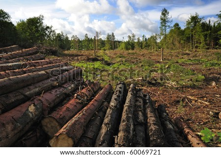 stock-photo-destroyed-forest-60069721.jpg